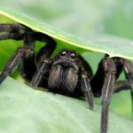 "An easy way to say ""Good bye"" to spiders: making a natural spider repellent"