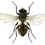 How to kill flies, natural recipes that will help you to get rid of nasty insects