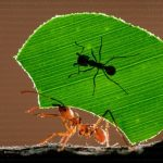 How to get rid of ants easily via eight working solutions