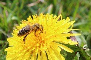 blossom pollen