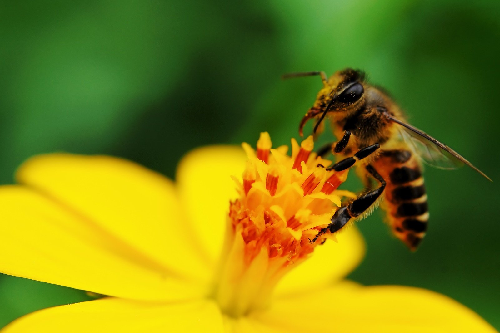 6 most effective home remedies for bee stings