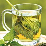 Recipes of homemade nettle tea and other uses of nettle's properties!