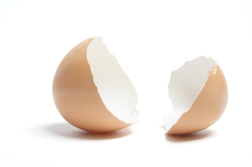 Egg Shells on White Background