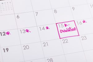 Ovulation and fertile period on calendar for couples trying to get pregnant